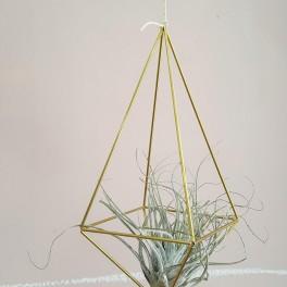 Rostlinná geometrie (náhled)