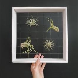 DIY obraz (náhled)