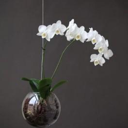 Na orchideje (náhled)