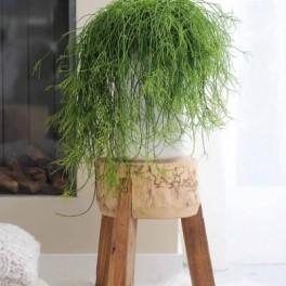 Velikonoční kaktus (náhled)
