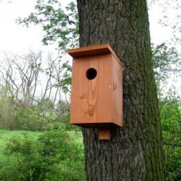 Ptačí budka (náhled)