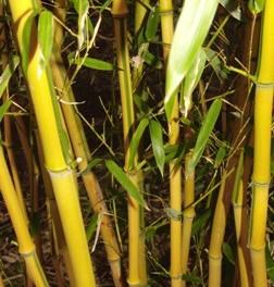 Bambusový lesík (náhled)