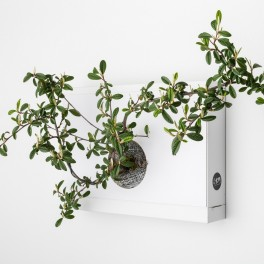 Obraz z živých rostlin (náhled)