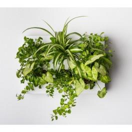 Tropická zahrada na stěnu (náhled)