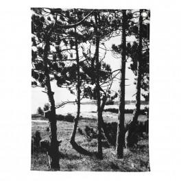 Utěrka s lesem (náhled)