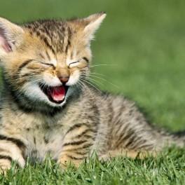 Kotě z útulku (náhled)