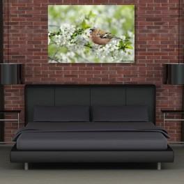 Ptačí (náhled)