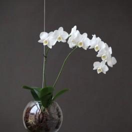 Aerárium pro orchidej (náhled)