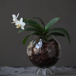 Terárium pro rostliny (náhled)