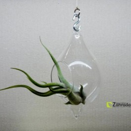 Rostlina v kapce (náhled)